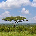 Tanzania. Tarangire National Park. Acacia. by vadim19