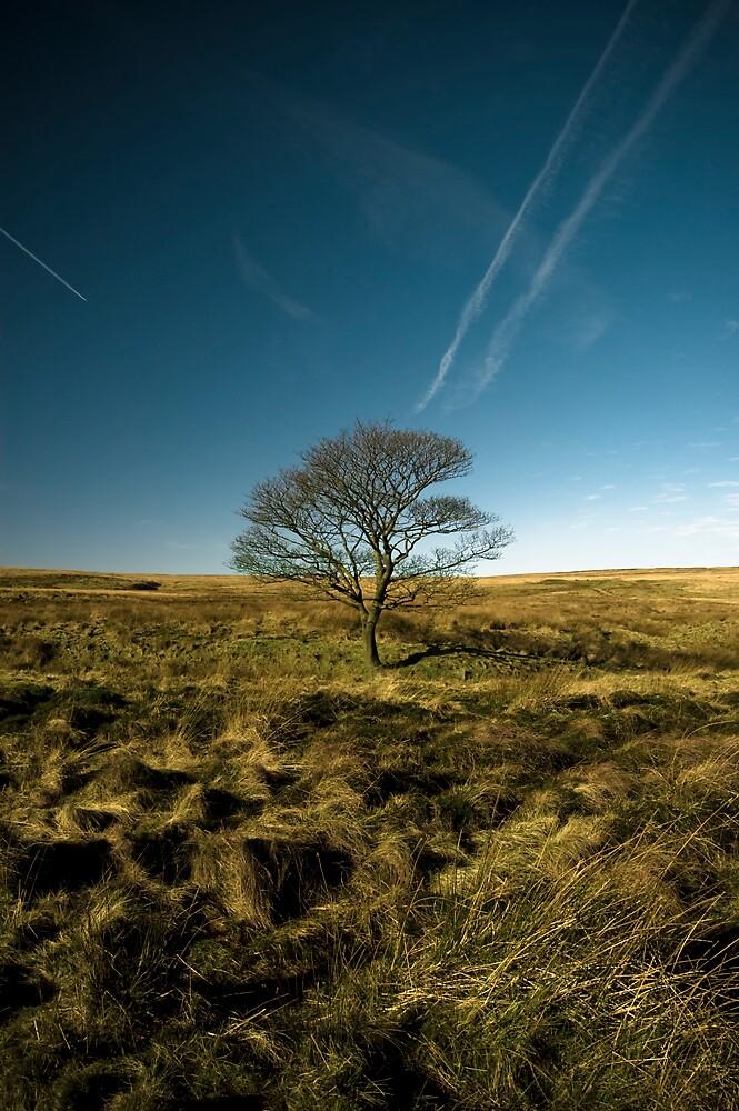 Solitary Tree by Dan Rowles