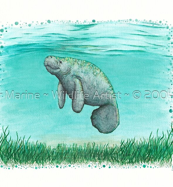 """Mossy Manatee"" by Amber Marine ~ Watercolor and ink painting, art © 2016 by Amber Marine ~ Wildlife Artist ~ © 2004-2019"
