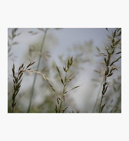 natural grass 2 Photographic Print