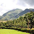 Maui's Tropical Plantation by Teresa Zieba