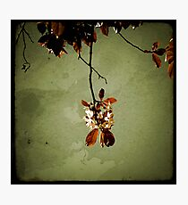 Suspendue Photographic Print