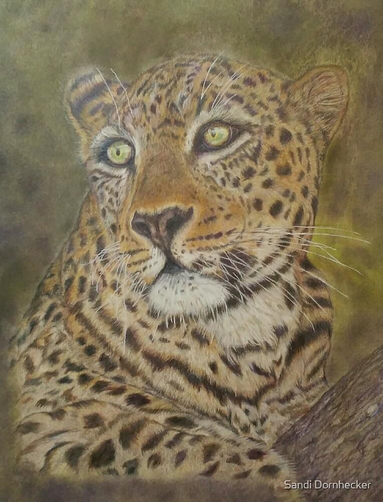 Amur Leopard - A Mother's Gaze by Sandi Dornhecker