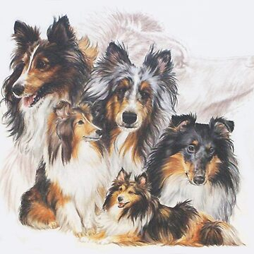 Shetland Sheepdog Grouping by BarbBarcikKeith