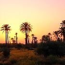 sunset behind the date palms by supergold