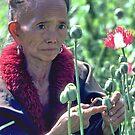 Poppy farmer by John Spies