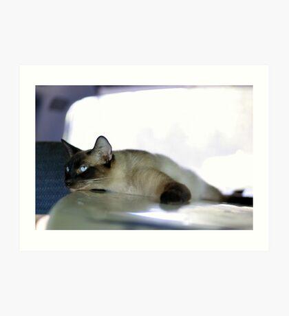 Car Kitty riding surfboard Art Print