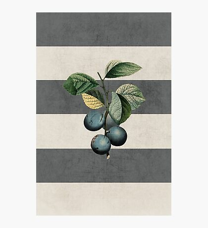 botanical stripes - plums Photographic Print