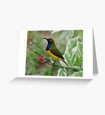 Male Sunbird Greeting Card