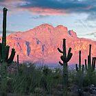 Cactus Sunset by Valentina Gatewood