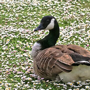 Goose resting by Dai-Boo