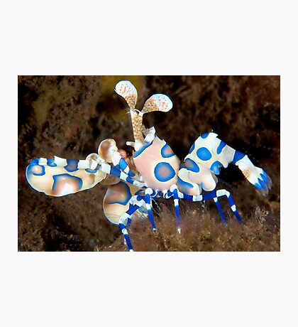 Harlequin March Photographic Print