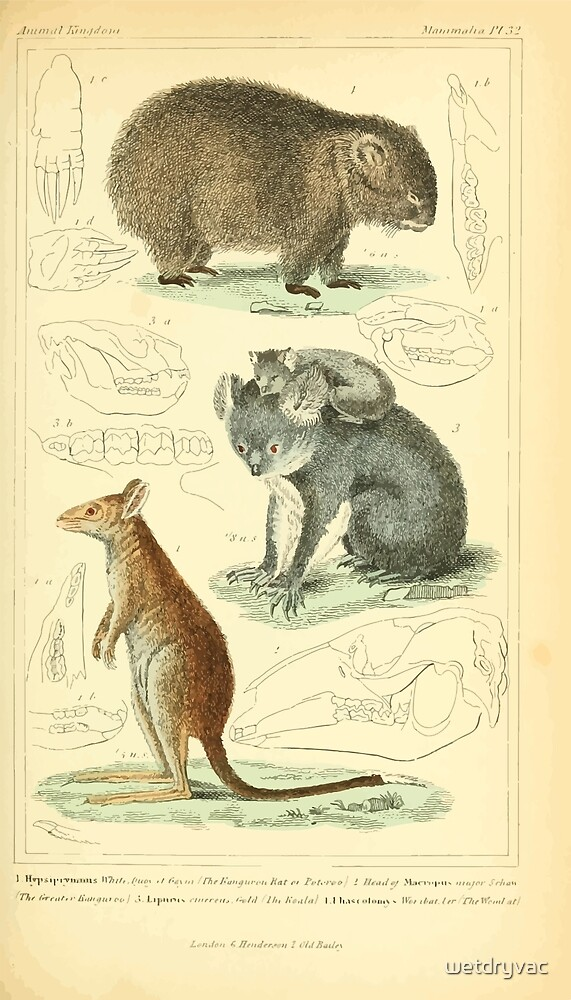 The Animal Kingdom by Georges Cuvier, PA Latreille, and Henry McMurtrie 1834 599 - Mammalia Mammals by wetdryvac