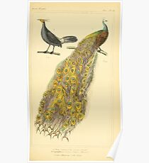 The Animal Kingdom by Georges Cuvier, PA Latreille, and Henry McMurtrie 1834 601 - Avies, Birds Poster