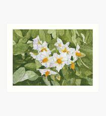 White Garden Blossoms Watercolor on Masa Paper Art Print