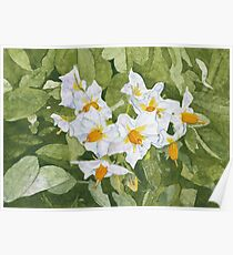 White Garden Blossoms Watercolor on Masa Paper Poster