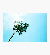 Pine in the Sky Photographic Print