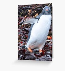 Gentoo Penguin Greeting Card