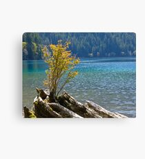 NEW TREE FINDS ROOT IN OLD TREE Canvas Print