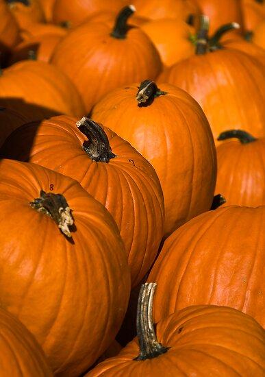 Pumpkins by Rob Lodge