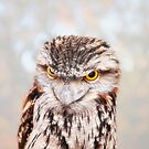 Tawny Frogmouth, Native Animal Rescue by Dave Catley