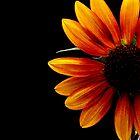 Half a Sunflower on black by TeAnne