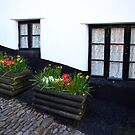 Cobbles and Flowers by Dave Law