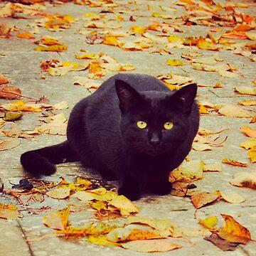 Cat in autumn by NoeliaUroz