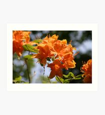 orange azalia Art Print