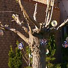 Suburbia.....in the 21st Century....A Disk Tree.... by Larry Llewellyn