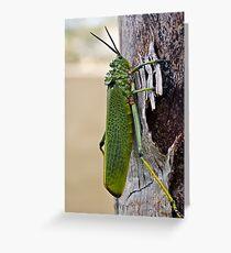 Locust on Palm Tree Bark Greeting Card