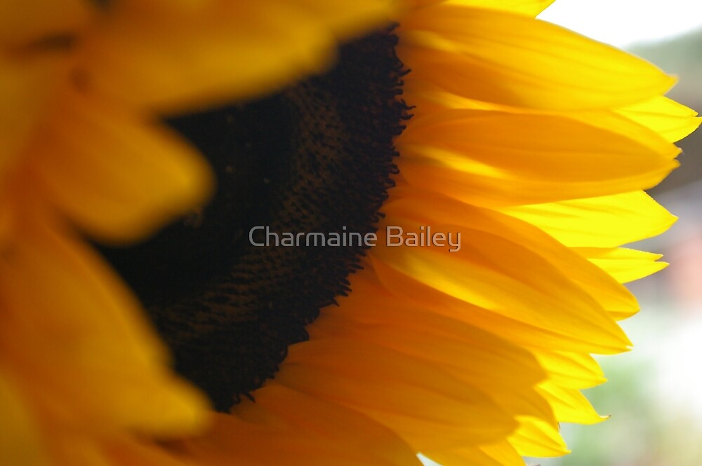 Warm Sunflower Petals by Charmaine Bailey