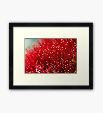 Pohutukawa Flower Framed Print