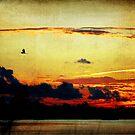 Evening Flight by Jonicool