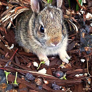 Cottontail Rabbit by lrspann1