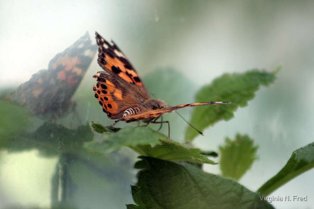 Butterfly Reflection by Virginia N. Fred
