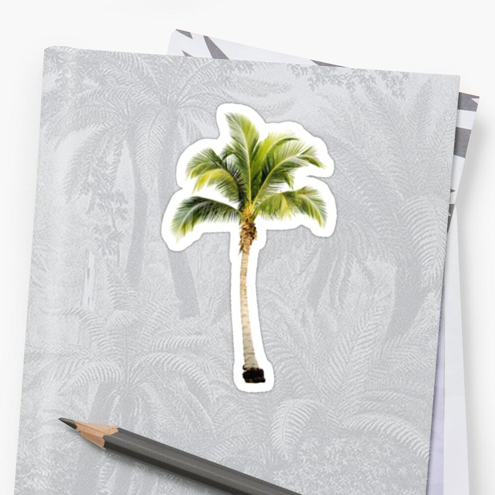 Palm Tree by sarahm86