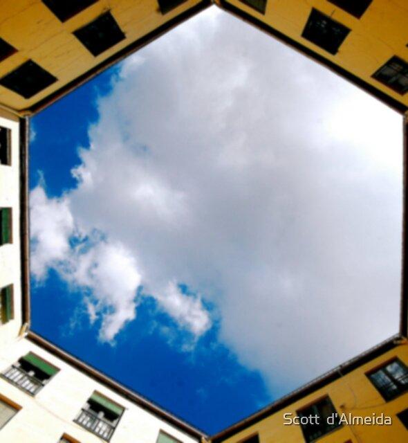 LOOKING UP by Scott  d'Almeida