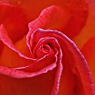 Romantic Rose by Robyn Carter