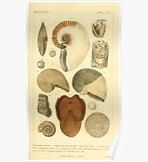 The Animal Kingdom by Georges Cuvier, PA Latreille, and Henry McMurtrie 1834  217 - Mollusca Mollusks Poster