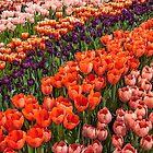 USA. Philadelphia. Philadelphia Flower Show 2018. Field of Tulips. by vadim19