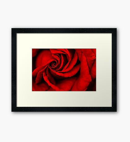 Rose Red Framed Print