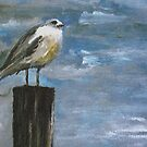 STORMY SEAGULL by hdettman