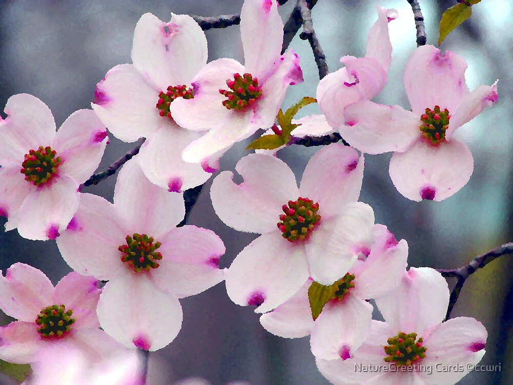 Wild Pink DogWood Flowers by NatureGreeting Cards ©ccwri