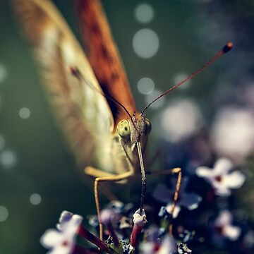 Butterfly close up by birba