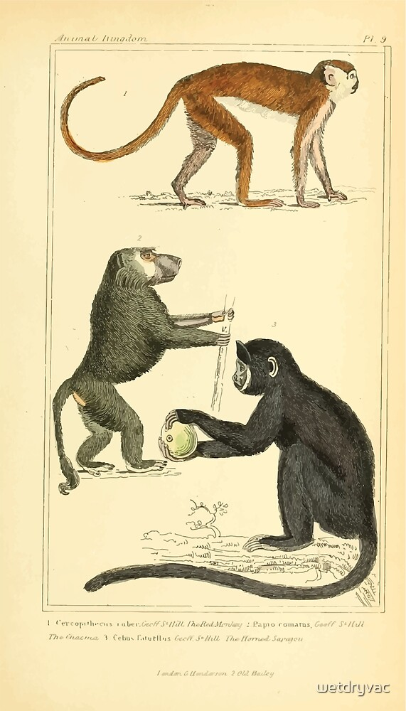 The Animal Kingdom by Georges Cuvier, PA Latreille, and Henry McMurtrie 1834 573 - Mammalia Mammals by wetdryvac