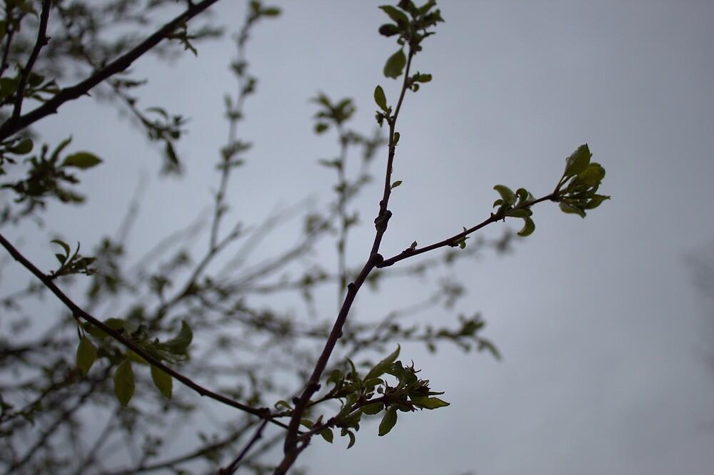 Epic Leaves by SquidneyBean04