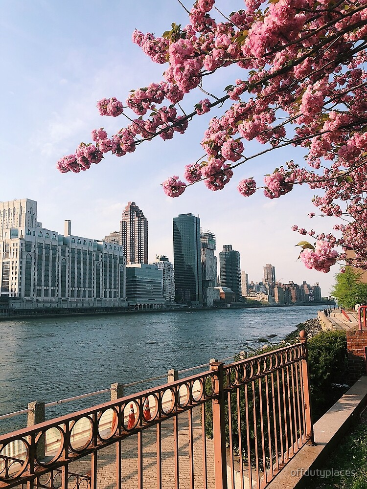Roosevelt Island NYC Cherry Blossoms by offdutyplaces