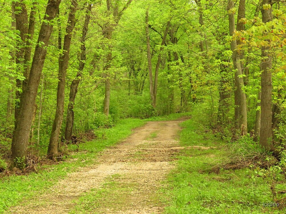 The Wooded Way   by lorilee