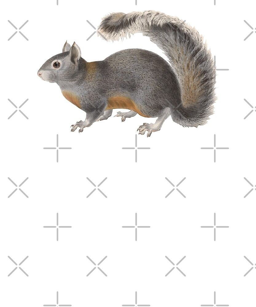 Cute Squirrel Lover Gift I Love Squirrels Bright Eyed and Bushy Tailed Squirrel Mom Gift by madeulaugh